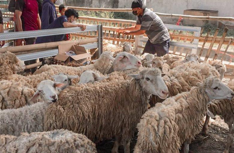 Masa PPKM, Panitia Qurban 1442 H STDIIS Jember Siasati Sistem Pembagian Daging